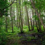 Wald bei Salem