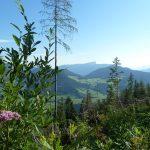 Blick zum Tal von der Blaueishütte-Strecke