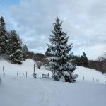 Almwiese im Winter