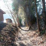 Waldweg auf der Höglrunde