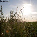 Sonnenschein über einem Getreidefeld bei Gonnersdorf