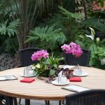 Orchideen in die Mitte des Tisches gepflanzt – Insel Mainau / Palmenhaus