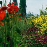 Staudengarten-Blumen auf der Insel Mainau