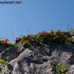 Artenvielfalt auf der Hochalmscharte