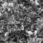 Pflanze am Höglwörthersee