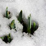 Frühling kommt