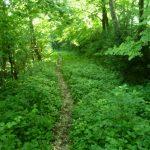 schmaler Pfad im Wald – Waxriessteig