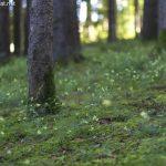 Wald beim Ainringer Moos