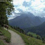 Soleleitungsweg mit Kühen