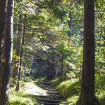 Weg durch den Wald zur Höllbachalm