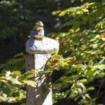 Steinmännchen – auf dem Weg zur Höllbachalm