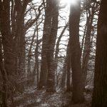 Gartsbruch in Neukalen