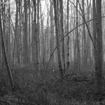 Spaziergang Au - Wälder Piding