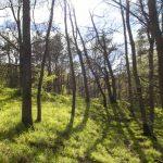 Waldspziergang bei Salem