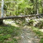 Forststrecke Richtung Pflasterbachhörndl