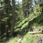Waldweg Richtung Pflasterbachhörndl