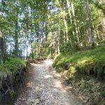 Weg Richtung Untersberg