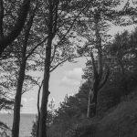 Küstenwald am Jasmunder Bodden auf Rügen