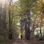 Herbst in 50 mm
